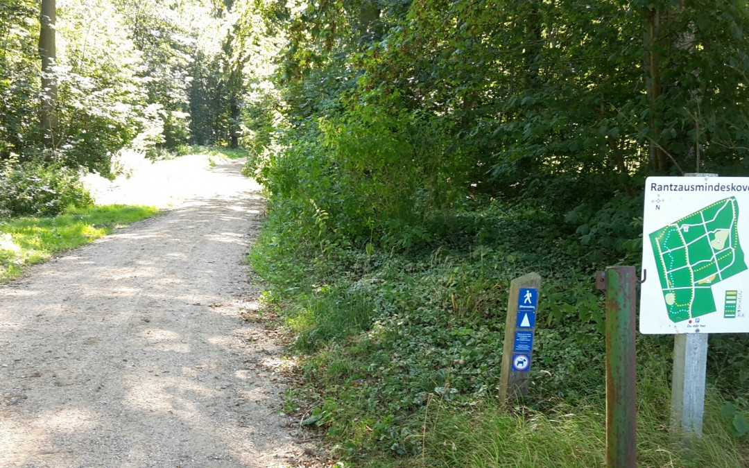 Rantzausminde Skov – træning og fynbokarrusen